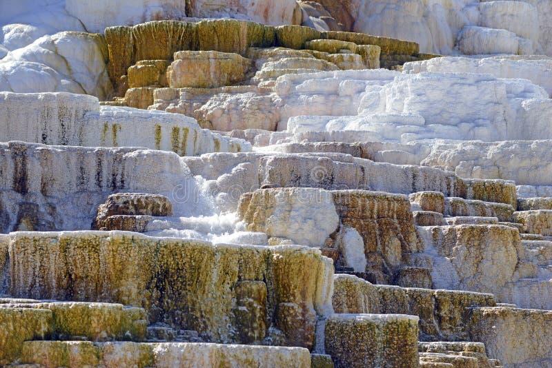 Террасы травертина, мамонтовые весны, национальный парк Йеллоустона, Вайоминг стоковые изображения rf