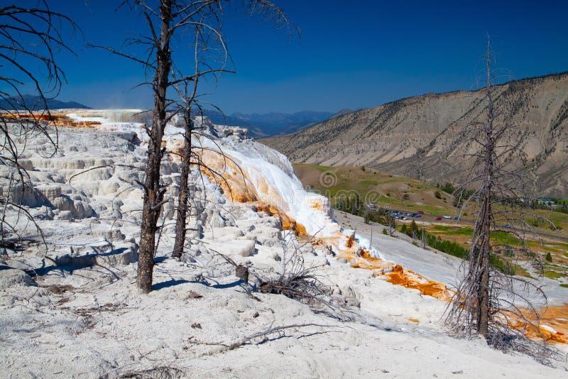 Террасы Mammoth Hot Springs, Вайоминг, США стоковые изображения rf