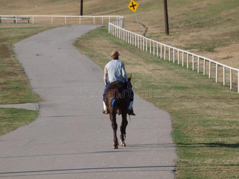 Техас любит лошадей и всадников стоковое изображение rf