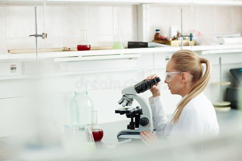 Техник лаборатории работая на анализах крови стоковая фотография rf