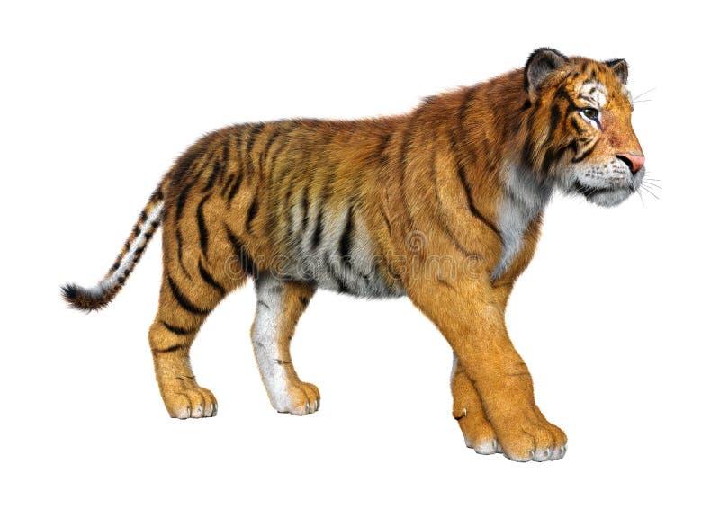 тигр большой кошки перевода 3D на белизне иллюстрация вектора