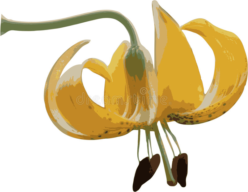 Download тигр лилии иллюстрация штока. иллюстрации насчитывающей одичало - 491811