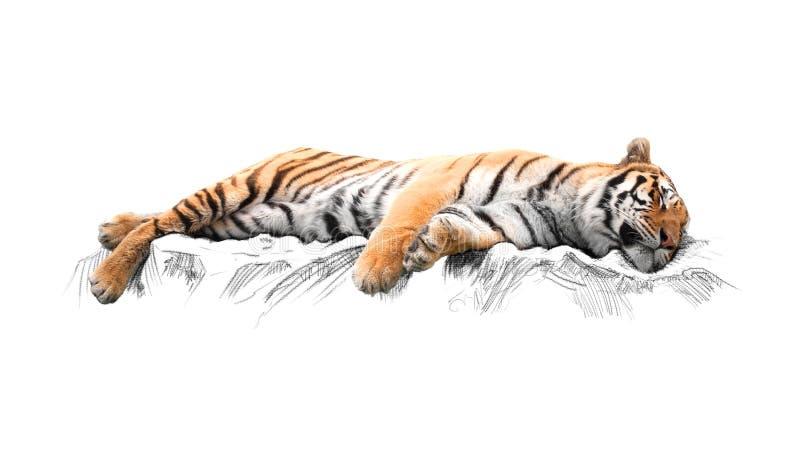 Тигр спать, на белой предпосылке бесплатная иллюстрация