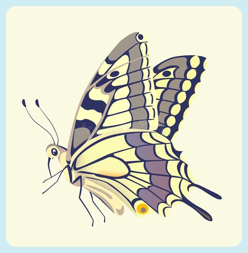 тигр swallowtail бабочки восточный иллюстрация вектора
