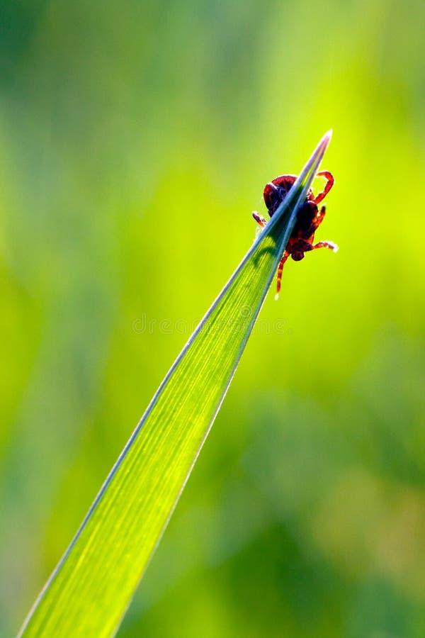 тикание травы стоковое фото