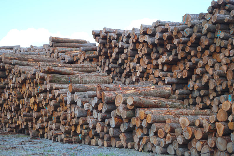 Тимберс дела лесного склада штабелировал окружающую среду индустрии леса lumbering древесина стоковые изображения rf