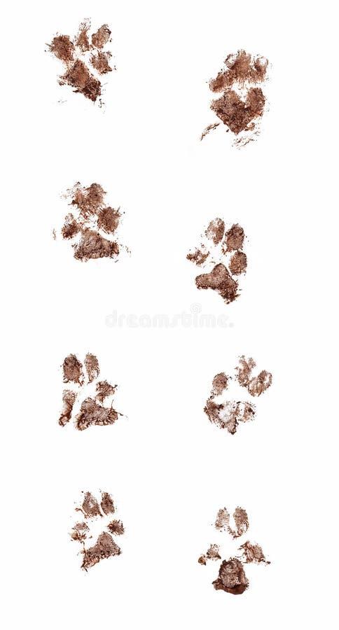 Тинные печати лапки собаки стоковые фотографии rf
