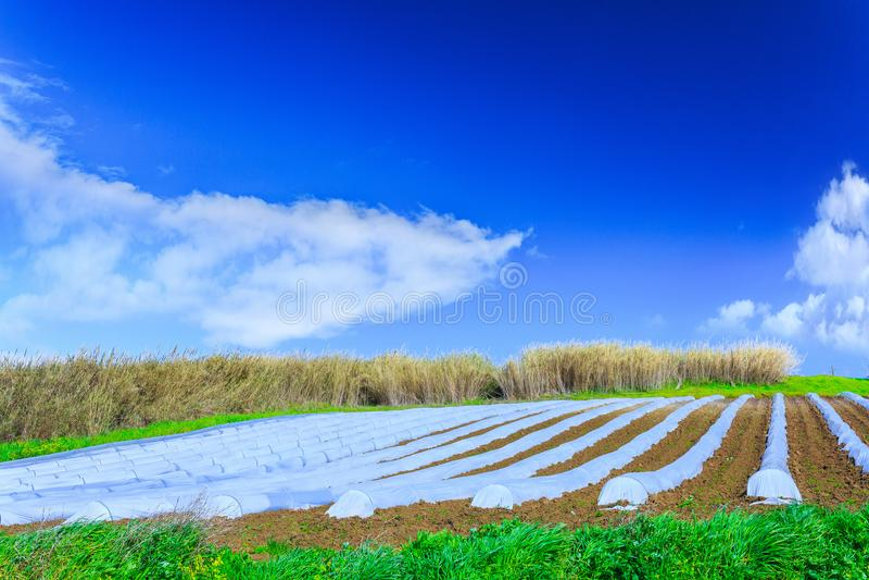 Типичная технология земледелия предыдущего культивирования весны  стоковая фотография