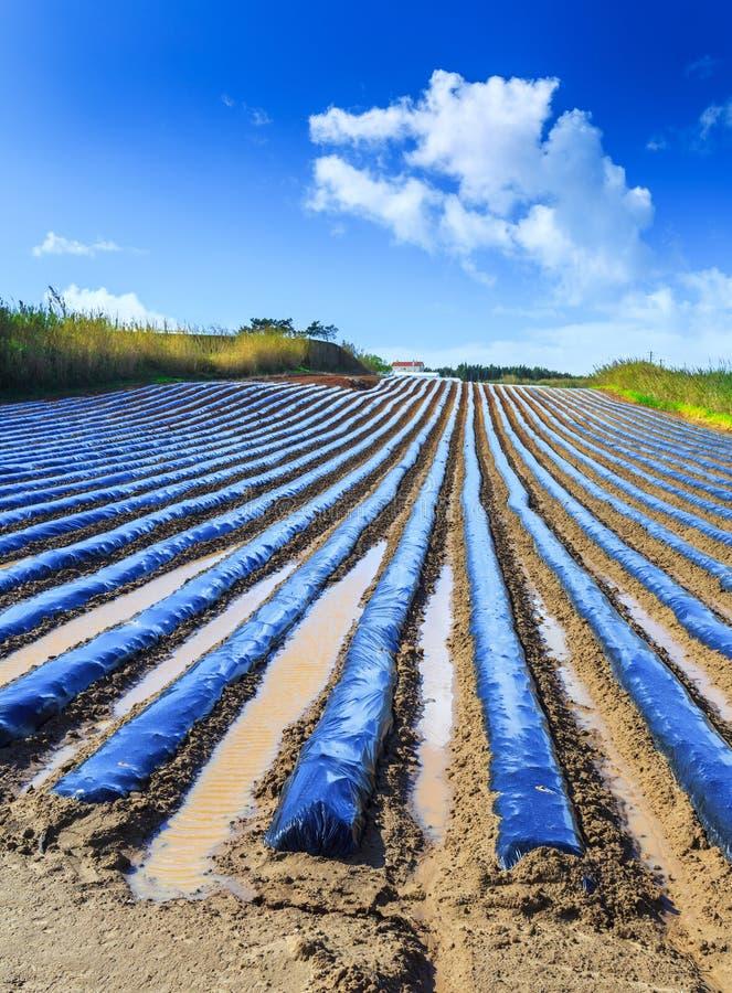 Типичная технология земледелия предыдущего культивирования весны  стоковое изображение rf