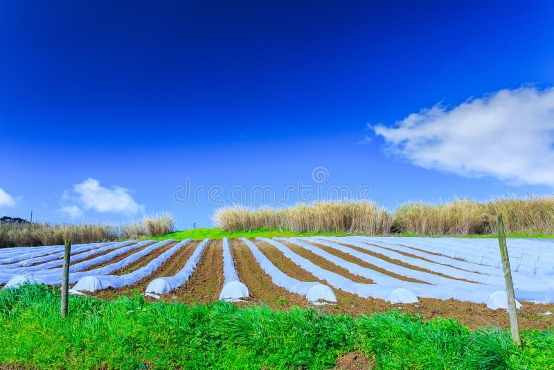 Типичная технология земледелия предыдущего культивирования весны  стоковое изображение