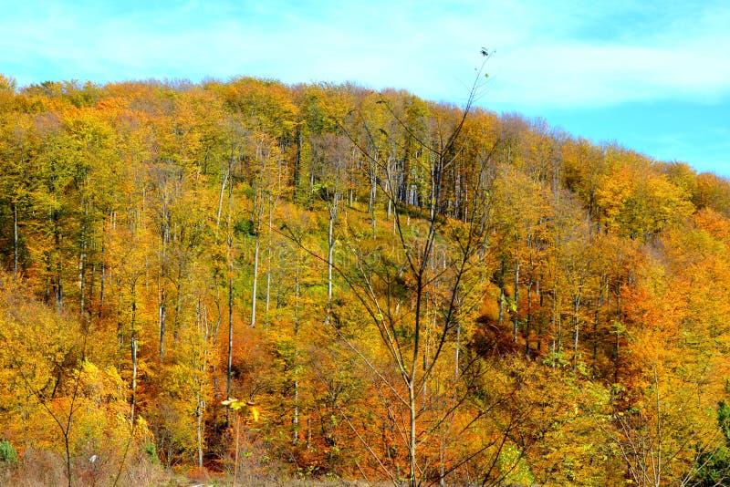 Типичное зрение в лесах Трансильвании, Румыния Осеннее представление стоковые изображения
