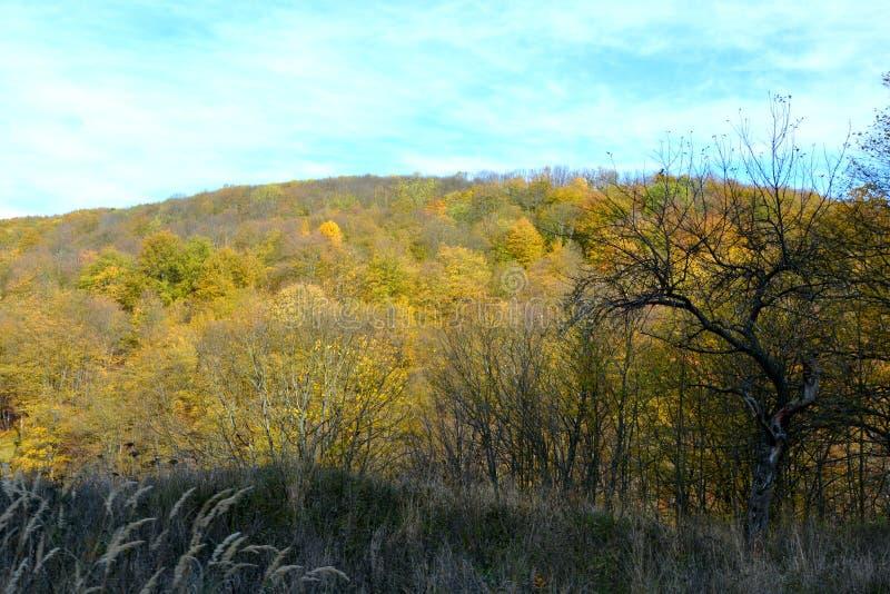 Типичное зрение в лесах Трансильвании, Румыния Осеннее представление стоковое изображение