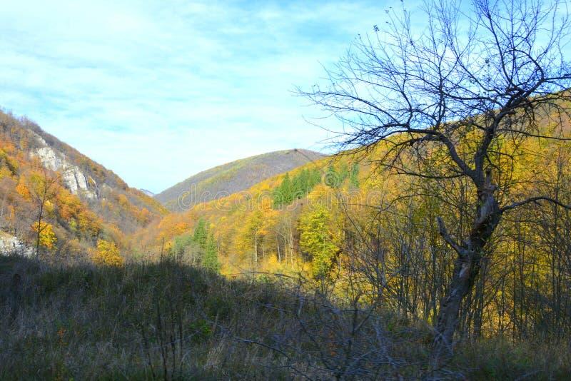Типичное зрение в лесах Трансильвании, Румыния Осеннее представление стоковая фотография rf