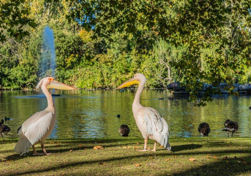 Типичный взгляд в зеленом парке в Лондоне стоковое фото