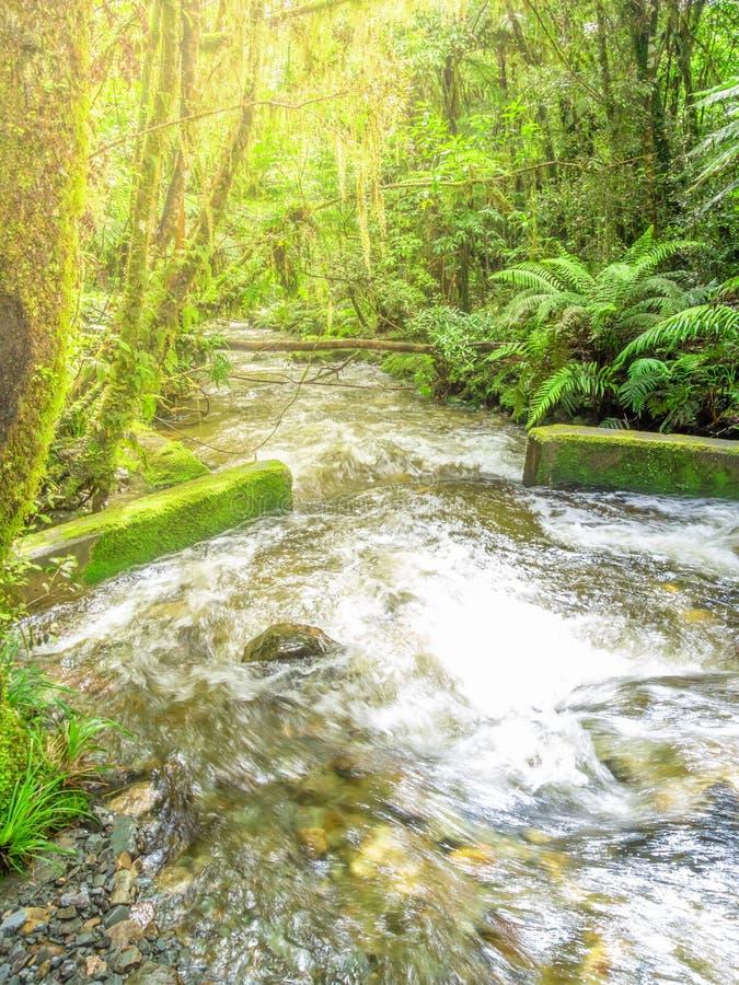 типичный лес с потоком в Новой Зеландии стоковые фото