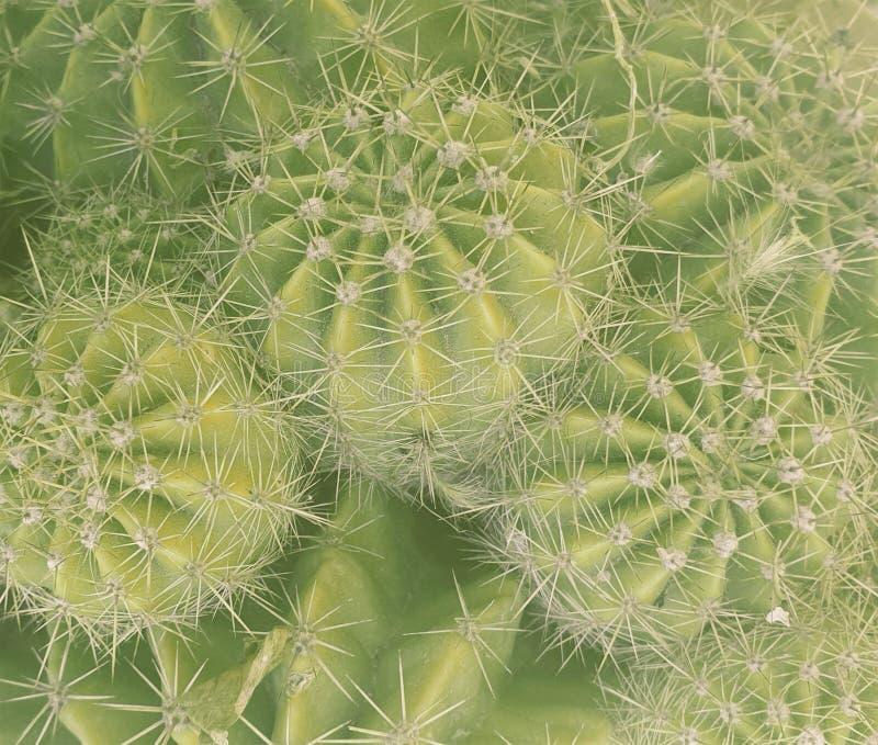 Тип кактуса стоковые изображения