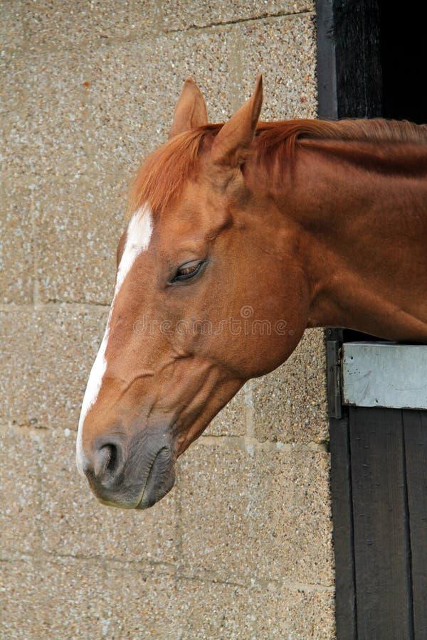 Тихая смотря лошадь стоковое фото rf
