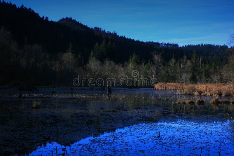 Тихие океан северо-западные лес и озеро свежей воды стоковые фото