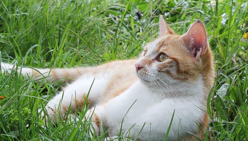 тихий кот в зеленом луге стоковые фото