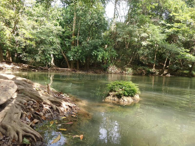 Тихий поток вдоль зеленого леса стоковая фотография rf