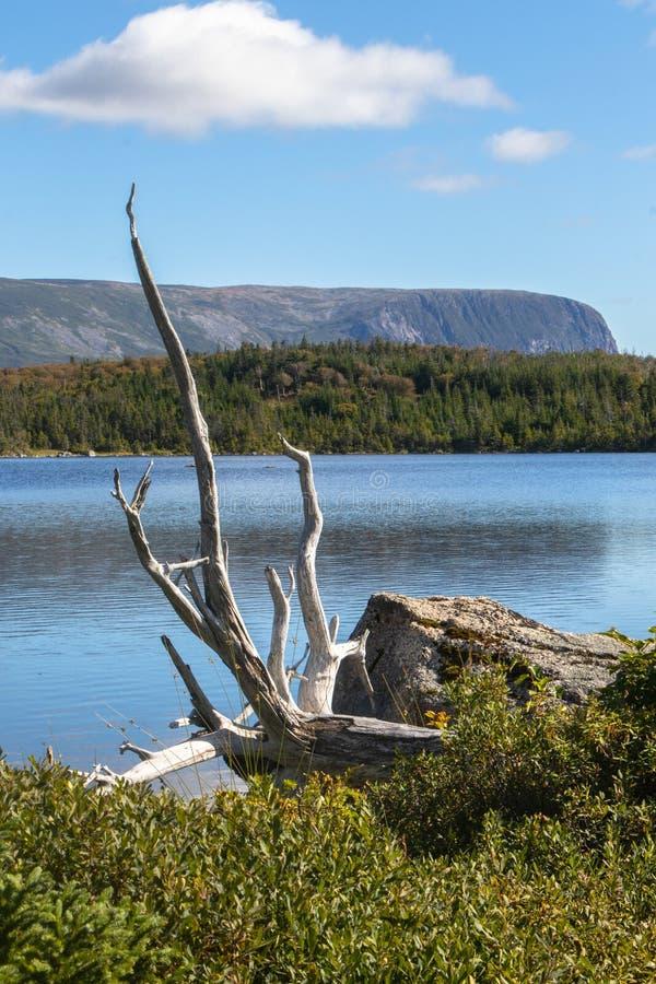 Тихий пруд в Gros Morne стоковые изображения rf