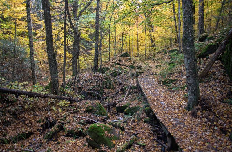 Тихий след осени стоковое фото rf