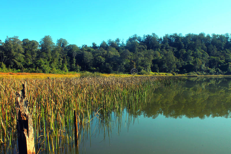 Тихое озеро стоковое фото