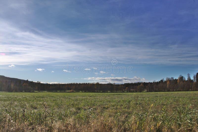 Тихое поле стоковая фотография rf