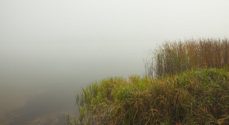 Тихое туманное раннее утро на озере леса Тростники и трава на переднем плане стоковая фотография rf