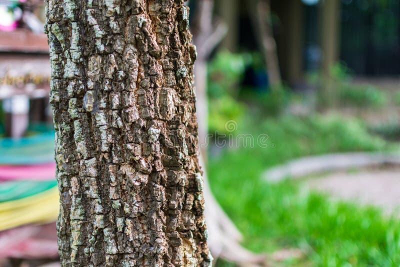 Ткань Миллингтония гортенз или Корк-Дерево стоковое изображение rf