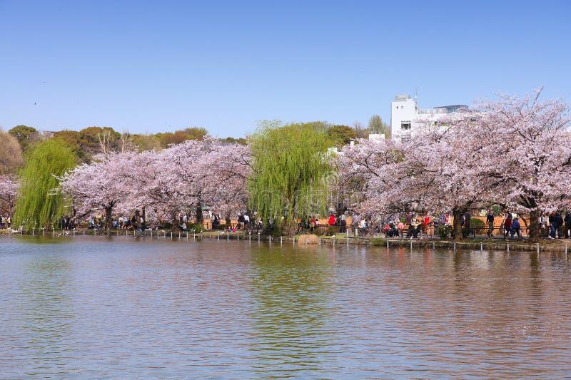 Токио стоковое изображение rf