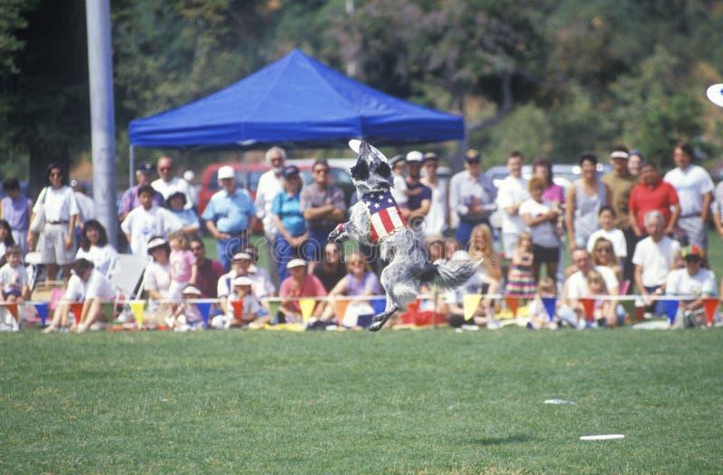 Толпа наблюдающ собачьим состязанием Frisbee стоковое изображение rf