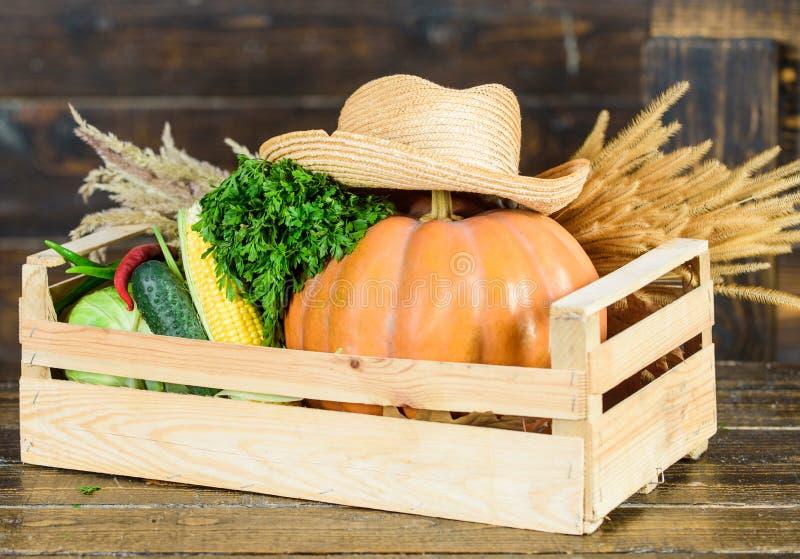 Только самые лучшие фрукты и овощи Органическая естественная еда halloween покупки в рынке здоровый продукт Сбор стоковое фото