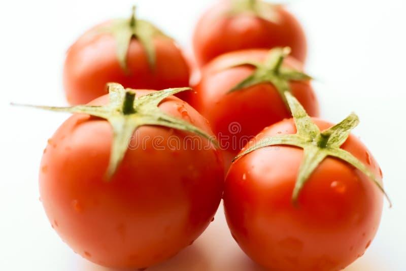 томаты белые Томат с падениями стоковое изображение