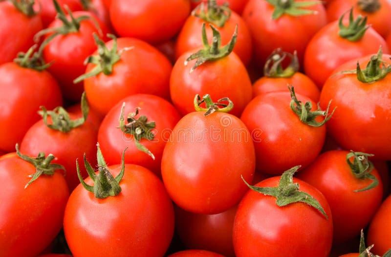 томаты выбранные предпосылкой стоковое изображение