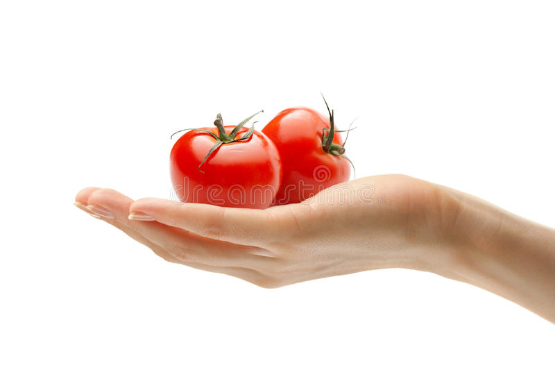 томаты руки стоковое фото rf