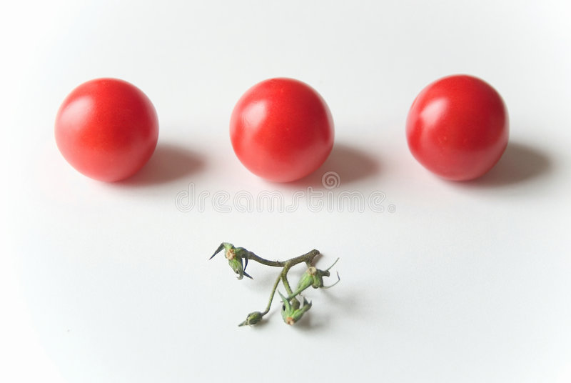 томаты рядка стоковое фото rf