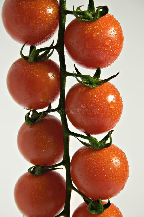 томат вишни ветви стоковое изображение