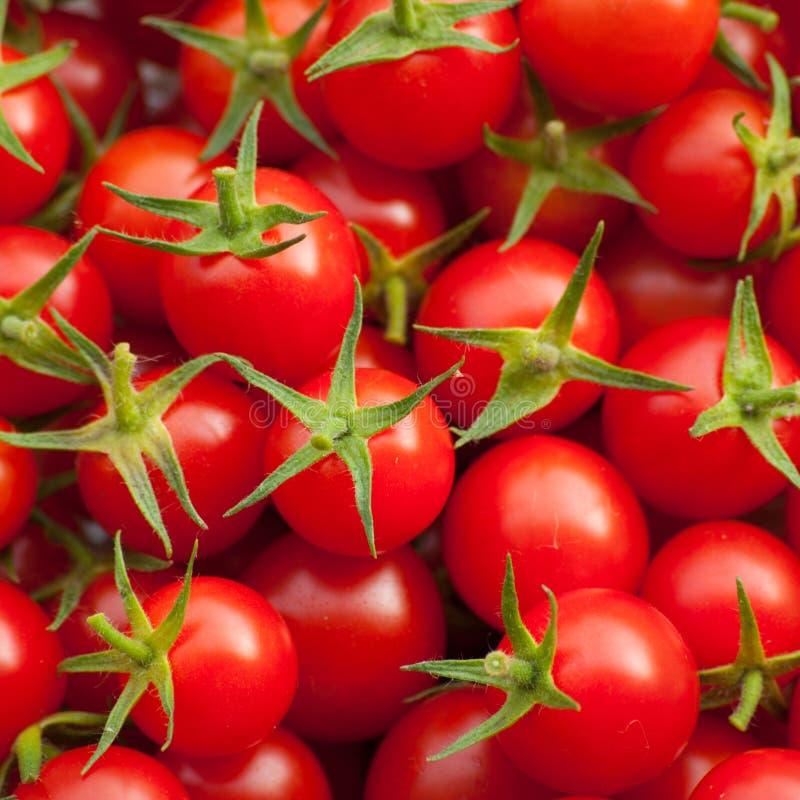 томат красного цвета серии вишни стоковое изображение rf