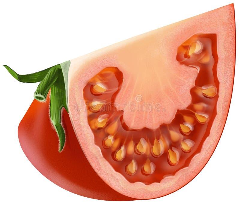 томат отрезанный частью иллюстрация вектора