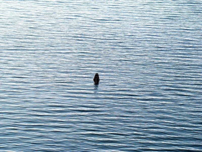 Томбуй в одиночестве лета моря стоковое фото rf