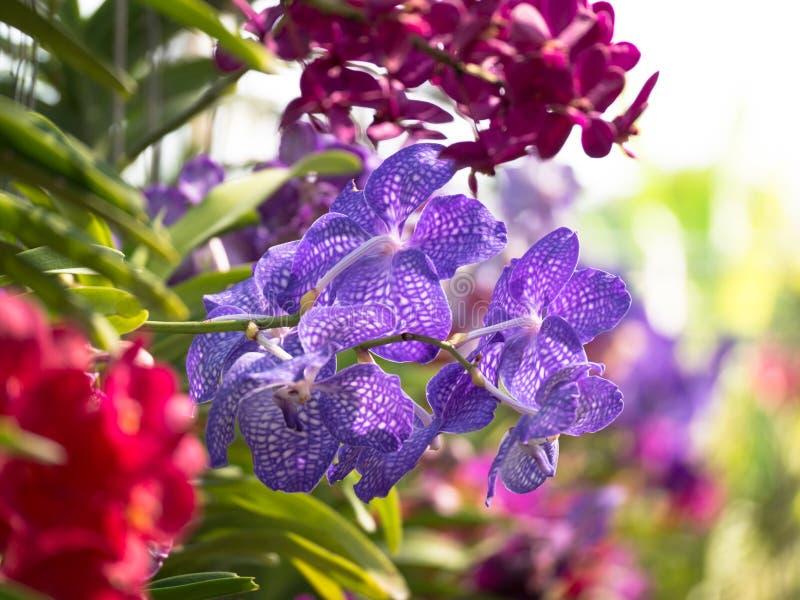 Тонизированный крупный план орхидеи изображения красочный стоковые фотографии rf