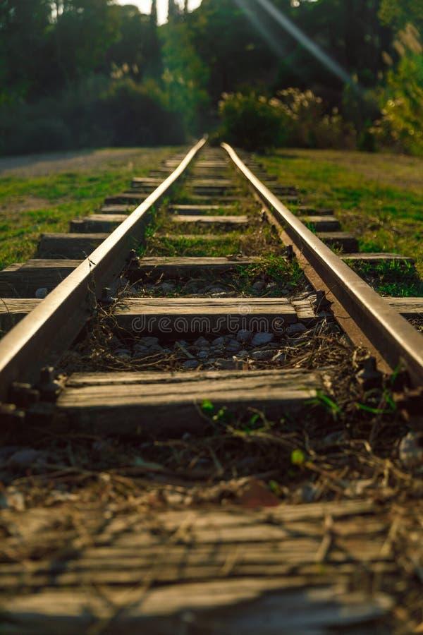 Тонкая железная дорога в лесе стоковая фотография