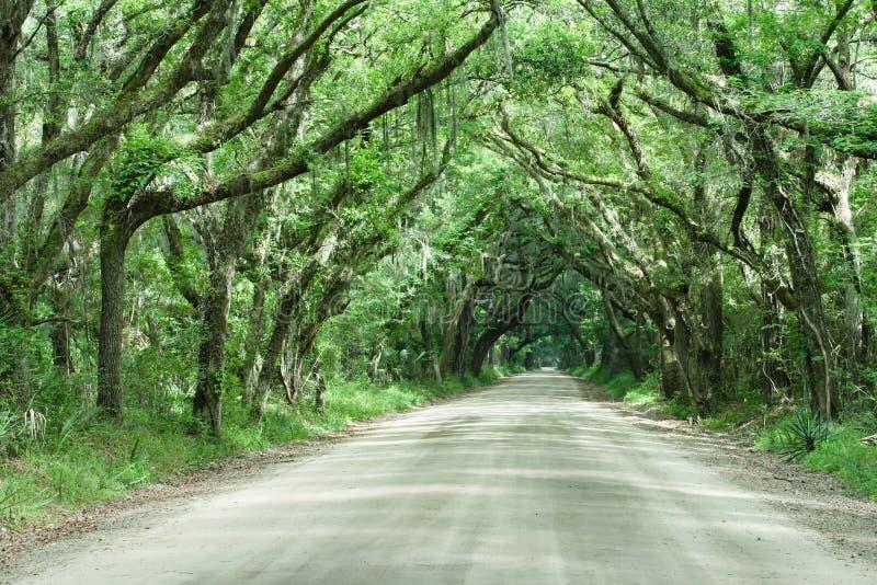 тоннель дороги дуба в реальном маштабе времени Каролины ботаники залива южный стоковое фото rf