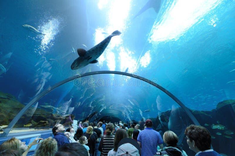 тоннель Georgia аквариума стоковая фотография rf