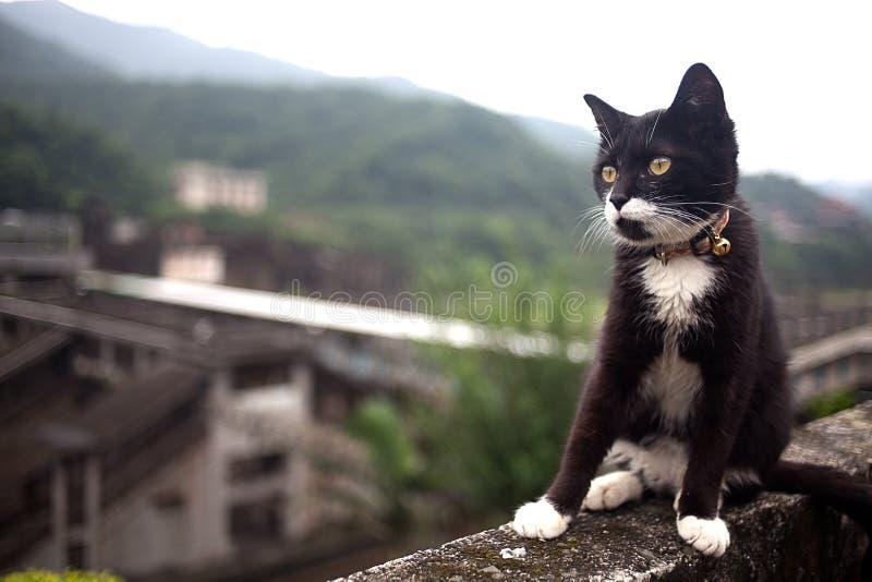 тоннель hou s taiwan кота стоковое фото rf