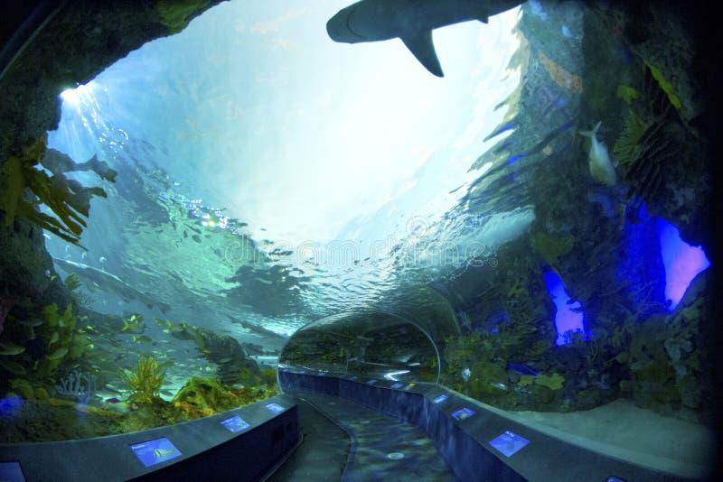 Тоннель аквариума стоковое изображение