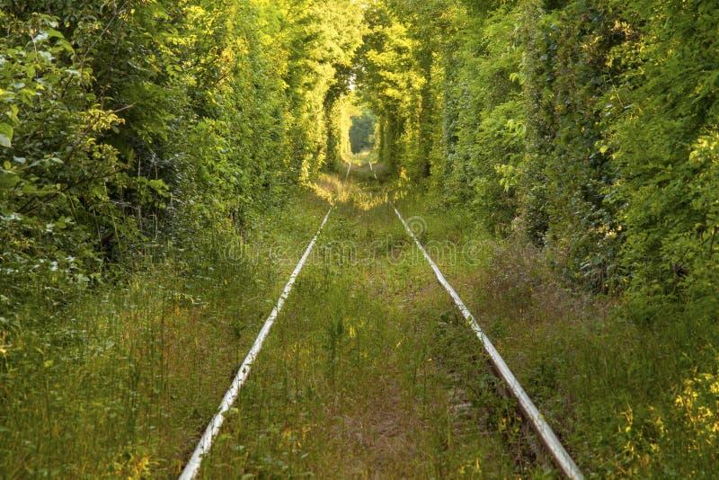 Тоннель влюбленности стоковое изображение rf