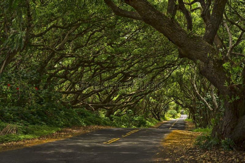 Тоннель дерева стоковое изображение rf