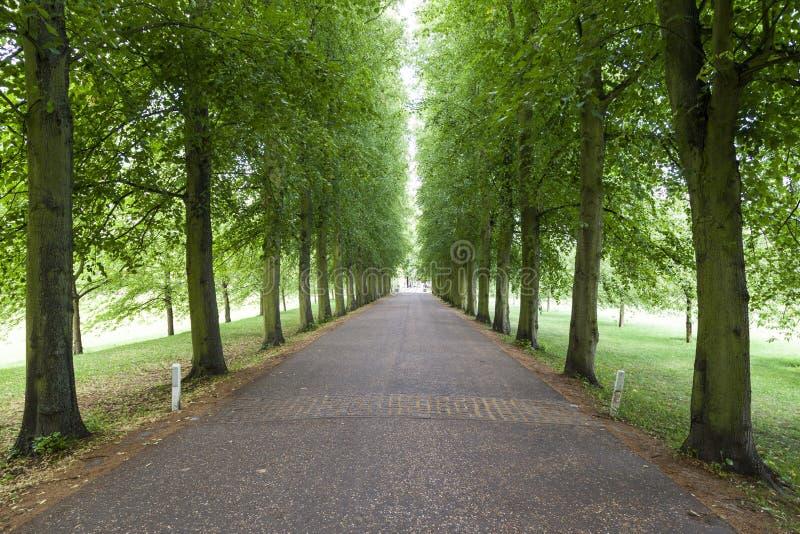 Тоннель Кембридж Англия деревьев стоковая фотография